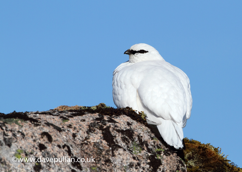 Ptarmigan_2013_DavePullan_MG_9156 copy copy830